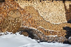 cum alegem lemnul pentru foc