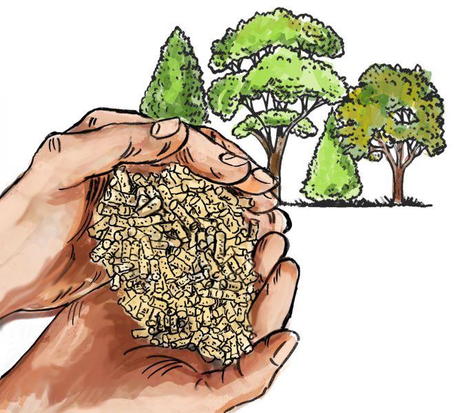 protejarea mediului